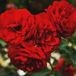 【5/14】今年の母の日は、お花以外のプレゼントを贈ってみませんか?.