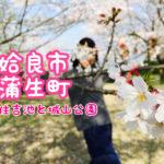 【来年】鹿児島県 姶良市 蒲生町の桜スポット【行ってみてね】