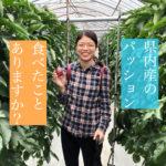 【南大隅町】パッションフルーツ収穫祭が開催されました〜!【はまださん】