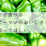 【南大隅】生で食べるピーマンのジューシーさよ【小濱さん】